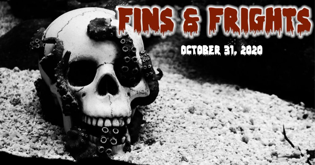 Fins and Frights
