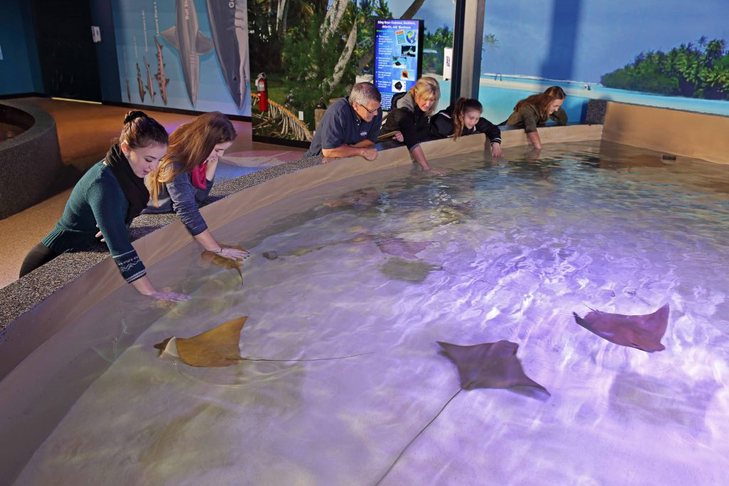Welcome to VIA Aquarium