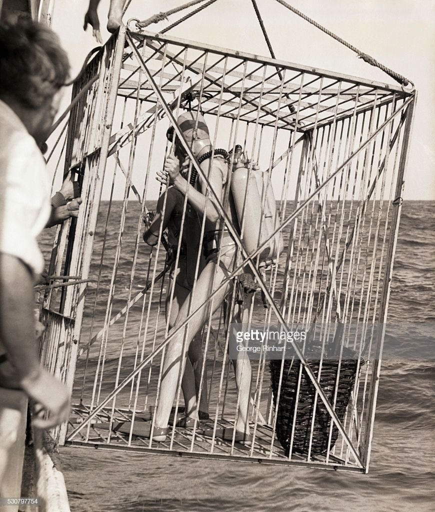 Shark Cages