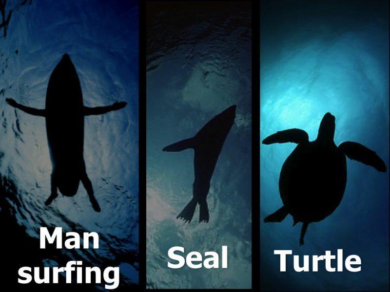Shark Mistaken Identity